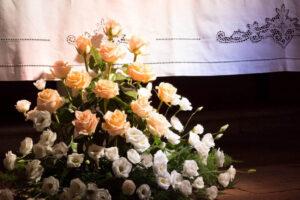 strelitzia piante e fiori decorazione rose visit colledivaldelsa