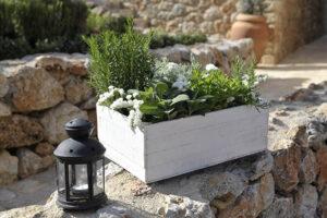 strelitzia piante e fiori decorazioni visit colledivaldelsa