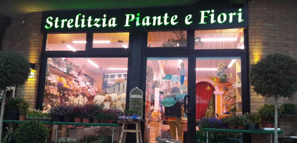 Strelitzia piante e fiori negozio visit colle di val d'elsa