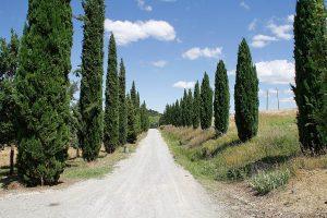Agriturismo Il Casino villa chianti Siena viale cipressi visit Colle di Val d'Elsa